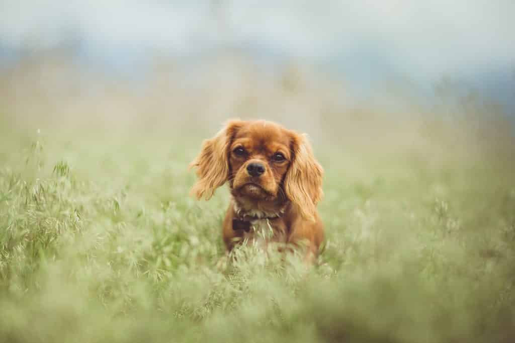 Top Cat-Friendly Breeds Of Dogs