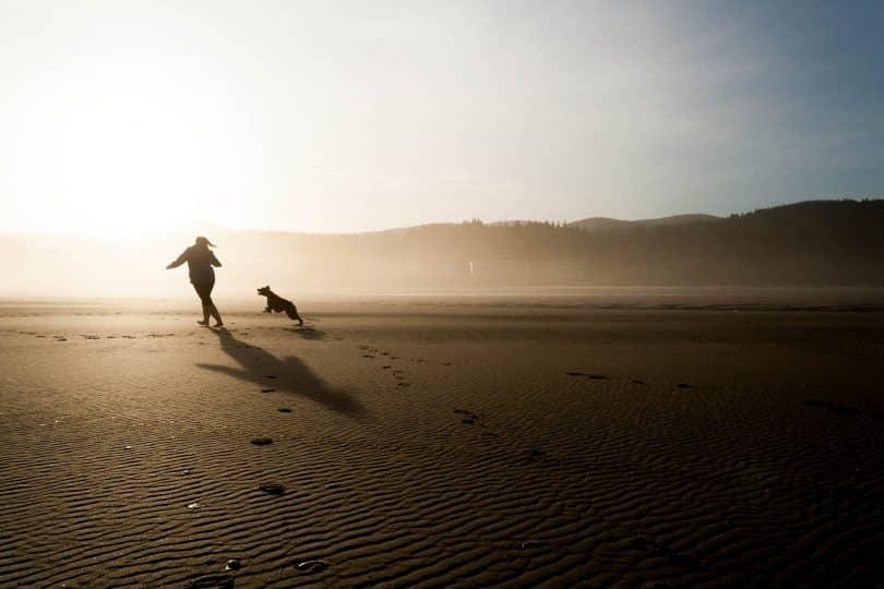 Companion dog playing with a woman.